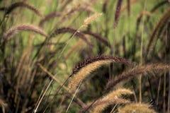 Växter i skuggor av gräsplan Royaltyfri Foto