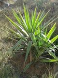 Växter i trädgård Royaltyfria Foton