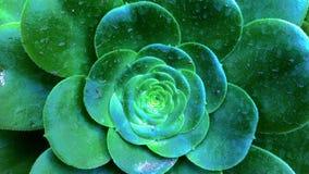Växter i trädgården av Norton Simon Museum av konst royaltyfri fotografi