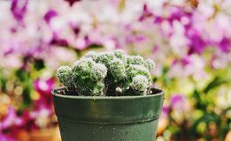 Växter i trädgården med kaktuns och rosa orkidér royaltyfria foton