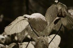 växter i trän Arkivbilder