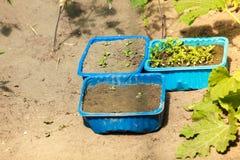 Växter i utomhus- plast- krukor Arkivbilder