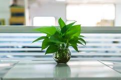 Växter i vaser på tabellen Royaltyfria Foton