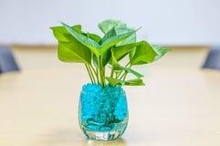 Växter i vaser på tabellen Royaltyfri Bild