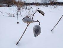 Växter i vinter Royaltyfri Fotografi