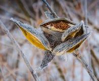 Växter i vinter Arkivbilder