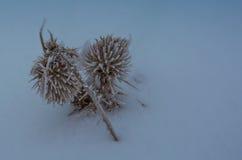 Växter i vinter Royaltyfri Bild