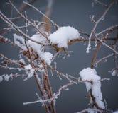 Växter i vinter Fotografering för Bildbyråer