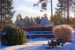 Växter i wintergardenen Arkivfoton