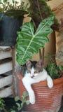 Växter, krukor och husdjur Arkivfoto