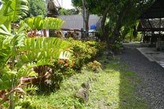 Växter längs simbassängen av San Vali, Digos stad, Davao del Sur, Filippinerna Royaltyfri Bild