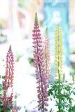 Växter med älskvärda flickas mjöl royaltyfri illustrationer