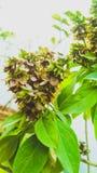 Växter med blommor royaltyfri bild