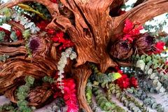 Växter med en konstgjord skönhet Royaltyfri Bild