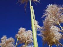 Växter med förbandsgas i förgrunden som underifrån ses, och en blått sk arkivfoton