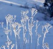 Växter med rimefrost Royaltyfri Fotografi