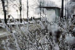 Växter med rimfrost i förgrunds- och spårvagnstationsbakgrund i Budapest arkivfoton