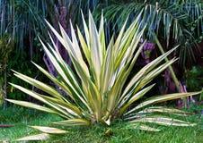 Växter med skarpa sidor Arkivfoto