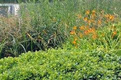 Växter nära en sjö Royaltyfria Foton