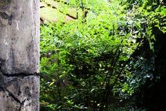 VÄXTER OCH BETONGVÄGG, BRASILIEN - November 30, 2016: växter och Arkivfoto