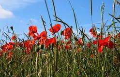 Växter och blommor royaltyfria bilder