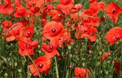 Växter och blommor royaltyfri foto