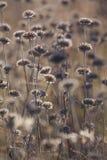Växter och blommor för höst torra i ängen Bakgrund Royaltyfri Bild