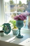 Växter och blommor i en härlig vas arkivfoton