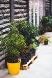 Växter och blommor i krukor av blomsterhandlaren shoppar ingången royaltyfri bild