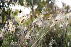 Växter och grässuddighetsbakgrund Royaltyfria Foton
