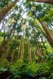 Växter och högväxta träd i en barrskog, botten-uppsikt arkivbild