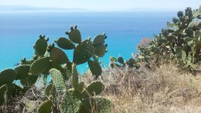 Växter och hav Fotografering för Bildbyråer