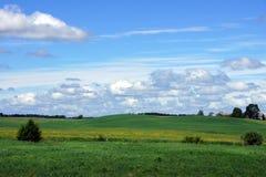 Växter och himmel Arkivfoto