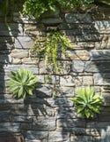 Växter och ormbunkar som växer ut ur en stenvägg arkivbild