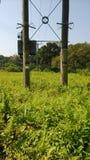 Växter och Pole Royaltyfri Foto