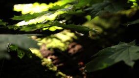 Växter och sidor i skogen stock video