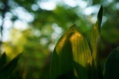 Växter och skogbakgrund Arkivfoton