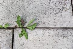 Växter och stenar Arkivfoto