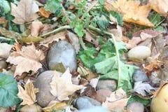 Växter och stenar i nedgång Arkivbilder