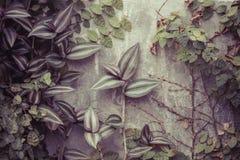 Växter och stenvägg Royaltyfria Bilder