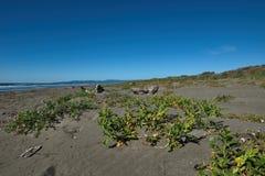 Växter och stor drivved på stranden Arkivbild