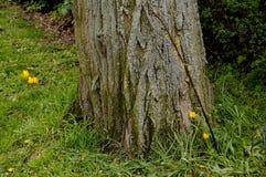 Växter och träd Royaltyfri Bild