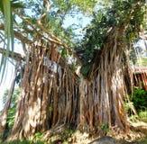 Växter och träd på Guadeloupe botaniska trädgårdar arkivbild