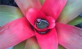 Växter och vatten Royaltyfria Bilder