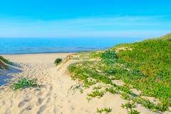 Växter och vitsand i den Rena Majore stranden Royaltyfria Bilder