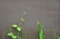 Växter på bakgrunden av metallisk målad yttersida Royaltyfri Foto