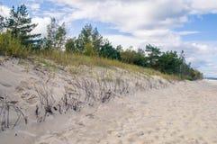 Växter på den baltiska stranden Arkivfoton
