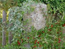 Växter på det trädgårds- staketet Arkivbild