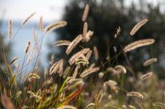 Växter på en backlit äng Fotografering för Bildbyråer