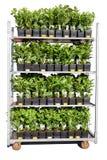 Växter på en behållare Arkivbilder